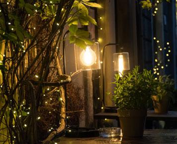 Mettre en lumière le végétal