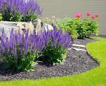 Un jardin sec sans arrosage